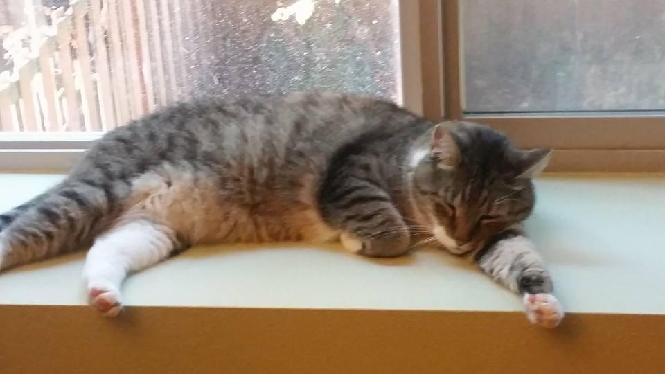 sleeping kitty in Seattle